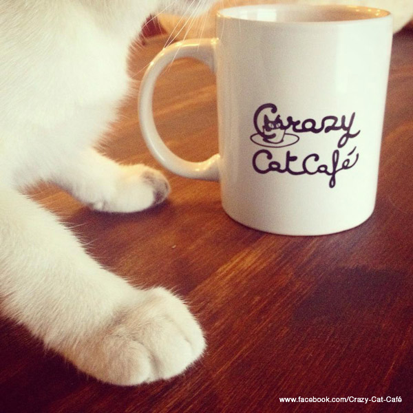 crazy-cat-cafe-milano
