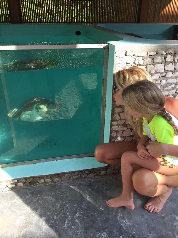 tartarughe-maldive-06