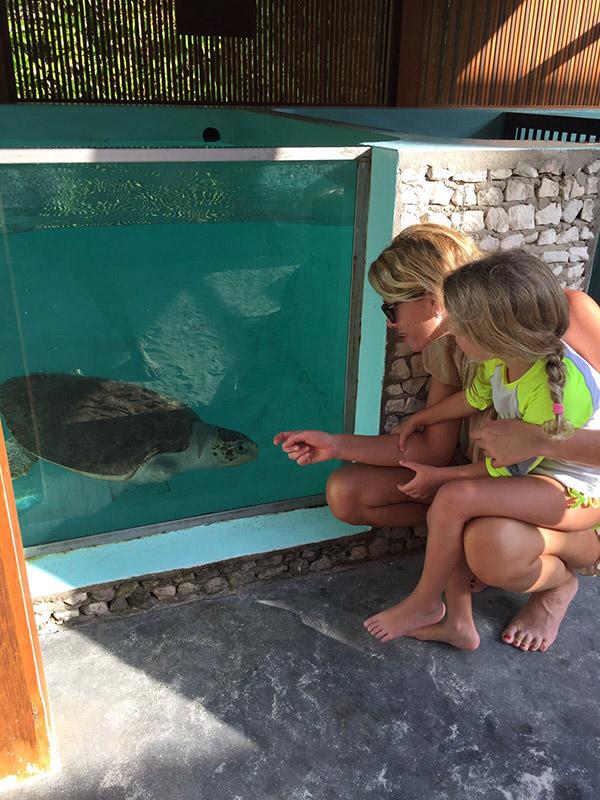 tartarughe-maldive-09