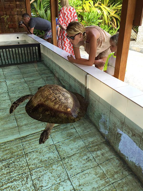 tartarughe-maldive-12